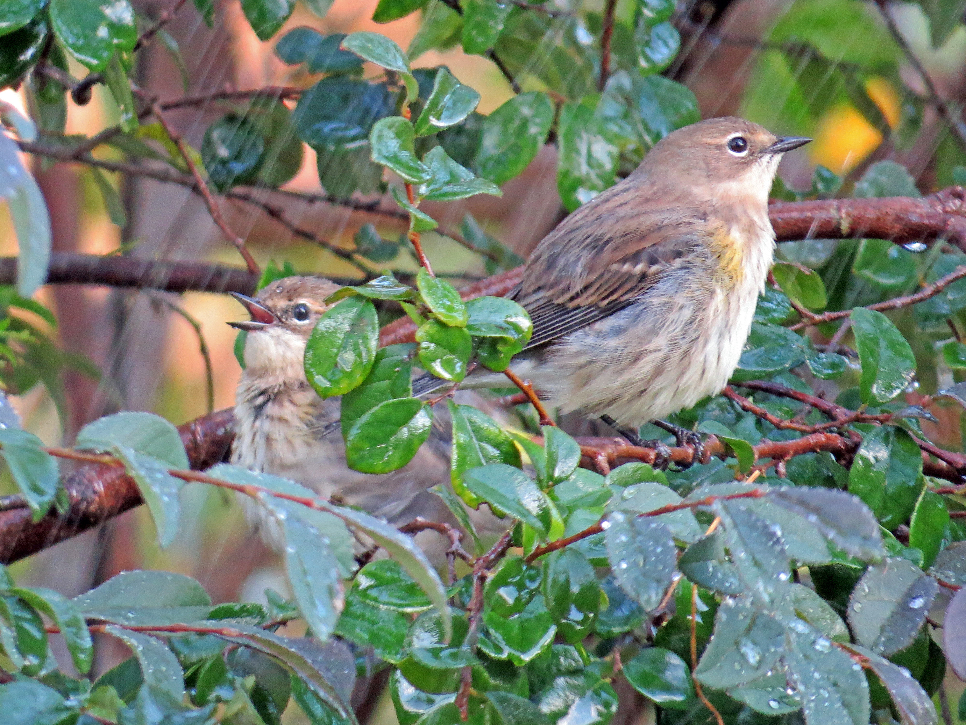 Florida Backyard Birds | North Florida Friends